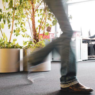 büro-pflanze